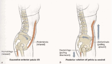 Pilates Anatomy p.41